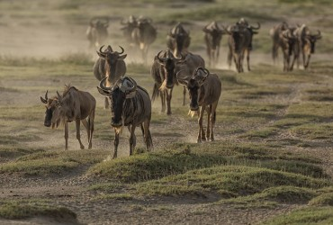 September Wildebeest-Migration-750x500-SFW