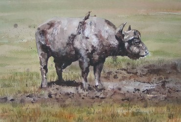 Water color of Cape Buffalo by Louise Hill