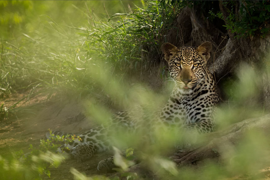 wildlife photography tour south africa