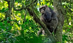 Destination-Gorillas_SFW