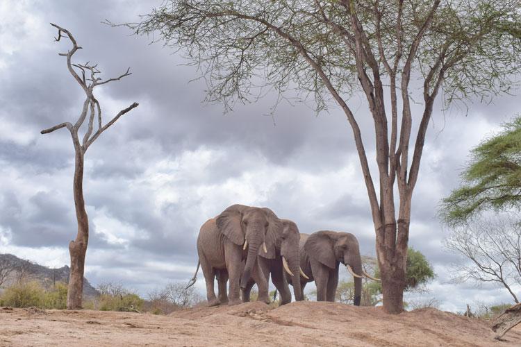 Elephants by trees