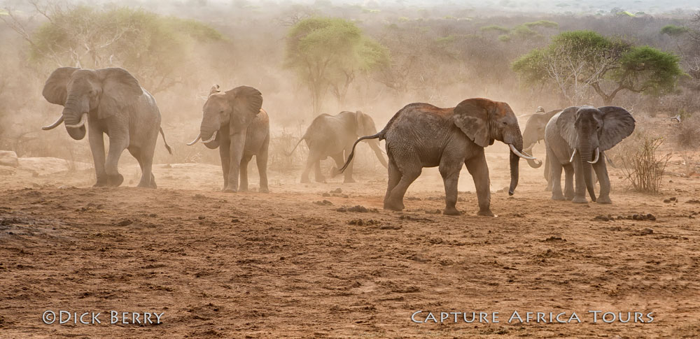 African Safari 2022